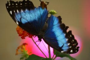 un té con le farfalle