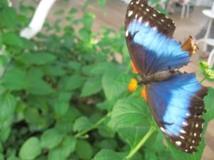 un té con le farfalle 2010