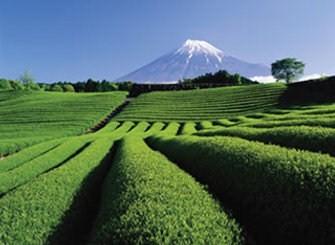 Shizuoka Giappone