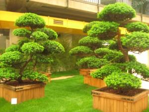 euroflora bonsai