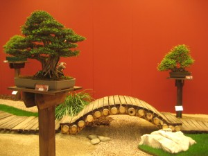 euroflora bonsai