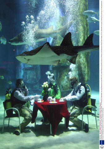 shark tea