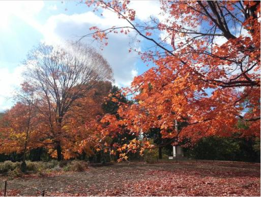 Fall foliage in Central Park, NYC
