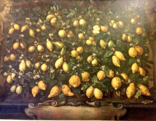 La varietà di limoni coltivati nelle limonaie medicee